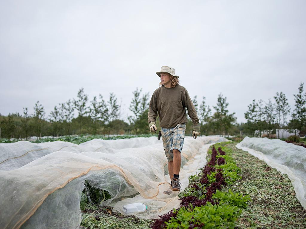how_grow_our_veg_plotgate_community_farm